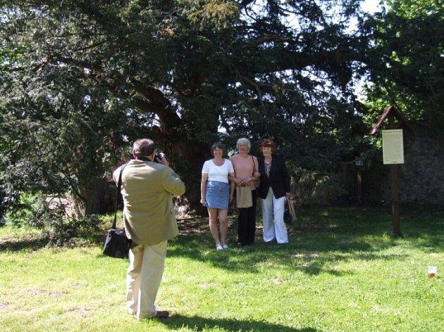 Památný strom. Málokdo z těch, kteří přijeli na slavnost, si nechal ujít příležitost vyfotit se u staletého tisu.