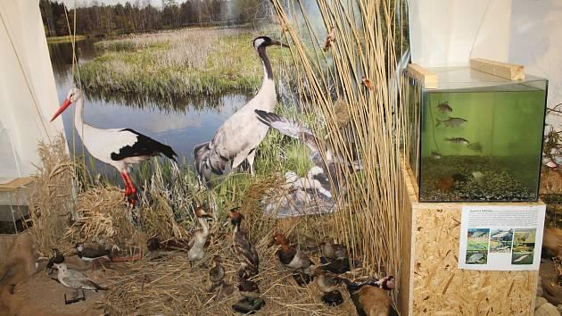 V brodském Muzeu Vysočiny probíhá výstava o přírodě.