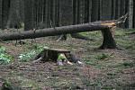 Nedělní vichřice napáchala obrovské škody i v lesích, které jsou majetkem Lesního družstva obcí Přibyslav.