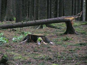 Přibyslav: Lesníci sčítají škody