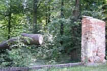 Takto dnes vypadá zámecký park v Golčově Jeníkově.