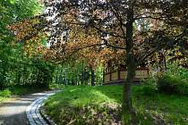 Stovky stromů v parku Budoucnost prošly odbornou péčí.