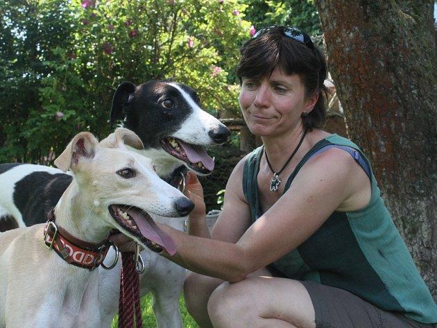 Jana Voháňková má zachráněné  chrty v dočasné péči. Doufá, že se pro ně najde láskyplný domov.