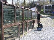Azyl v záchranné stanici nacházejí desítky handicapovaných zvířat a ptáků. Pomoci s péčí o ně mohou adoptivní rodiče.
