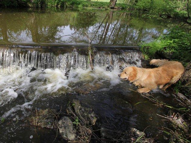 Šlapanka. Řeka v horní části Věžnice na Havlíčkobrodsku se v četných meandrech takřka nepohne, výjimkou je přírodní jez (na snímku) mezi rybníkem Kukle a fotbalovým hřištěm.