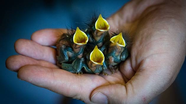 Nový koncept pomoci v Pavlově: Darujte pod stromeček naději na život.Foto: archiv Záchranná stanice Pavlov