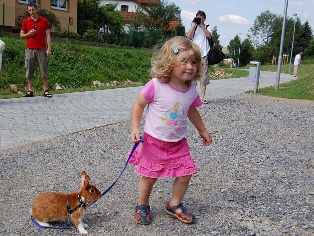 Výcvikovou školičku pro králíky  pořádá terapeutické sdružení Andílci v kožíšku. Podle jejích zkušeností se králík, stejně jako třeba pes, dá cvičit.