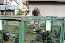 Chovatelé v Leštině mají vlastní klubovnu a pozemek, kde pořádají vyhlášené výstavy.