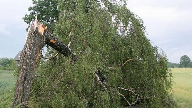 Po bouřce zůstaly na silnicích Havlíčkobrodská desítky popadaných stromů, které bránily průjezdu.