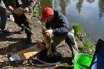 Za uloveného amura, který měřil 55 cm, získal šťastný rybář 55 bodů.