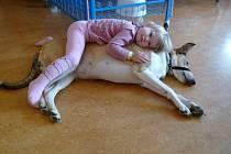 Canisterapie. Tříletá fenka Meggie potěší malé pacienty v havlíčkobrodské nemocnici každý měsíc.
