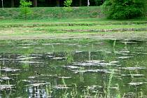 Rybník Cihlář.