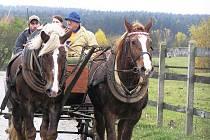 Kdo nezvládl jízdu na koni, mohl se za liškou projet v kočáře.