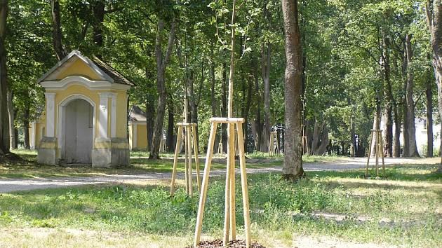 Alej se omlazuje. Výraznou proměnou prochází alej kolem poutního místa u sv. Anny u Pohledu.