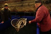 Živé ryby jsou k mání v Ronově.