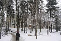 Úpravy nutné. Stromy a keře obklopují pavilony brodské nemocnice doslova ze všech stran. Ovšem některé z nich mají nejlepší léta za sebou a omlazení potřebují.