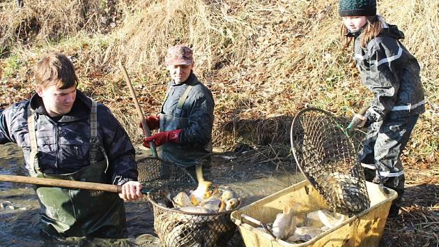 V sobotu se lovil rybník na Vysoké. V podběrácích uvízlo 25 metráků ryb.