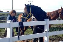 Šestapadesátiletý muž z Luk nad Jihlavou loni v dubnu obtěžoval šestnáctiletou dívku, která se v ohradě starala o svého koně. V pondělí si u jihlavského soudu vyslechl trest. Ilustrační foto: