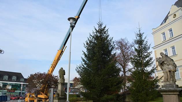 Vánoční strom ve Světlé nad Sázavou už stojí. Foto: Jiří Víšek