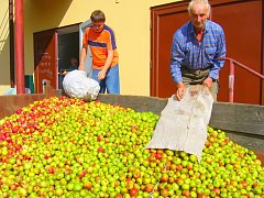 Ve výkupu. Cena jablek je letos podle Petra Průši dvě koruny za kilo ovoce. To pak míří často do Rakouska.
