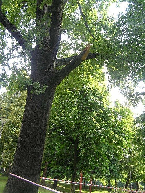 Čtvrteční noční vichřice napáchala škody také v havlíčkobrodkém parku Budoucnost. Silné větve urostlých lip lámala jako sirky.
