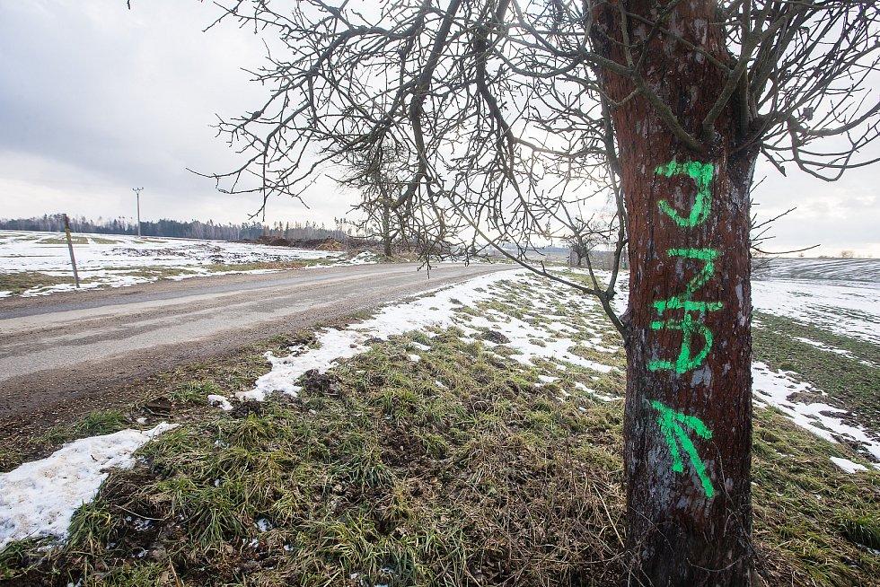 Hanlivé nápisy na stromech u Šlapanova na Havlíčkobrodsku.