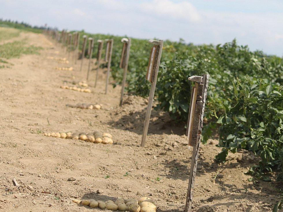 Díky velkému suchu ve značné části Evropy je možné, že se ceny brambor budou zvyšovat. Spolu s tím by ale měla jít nahoru i kvalita brambor.