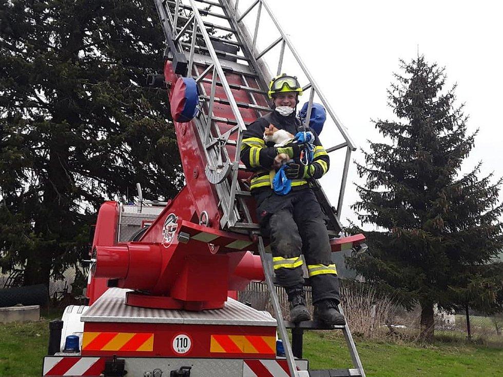 Kočku ze stromu v Sychrově museli sundat hasiči.