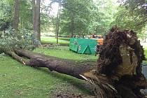 Strom se zřítil na frekventovaném místě.
