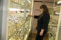 Uchování geofondu. Posláním banky genetických zdrojů bramboru je shromažďování a rozšiřování kolekce, dlouhodobé a spolehlivé uchovávání genofondu a jeho regenerace, systematické studium, hodnocení a charakterizace vzorků, dokumentace genetických zdrojů..
