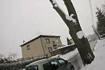 Minimálně jeden nebezpečný strom na Ledečské ulici v Perknově půjde k zemi. Zaměstnanci technických služeb ale musí počkat, až sníh roztaje.