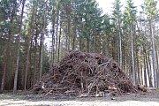Skládky vytěženého kůrovcového dřeva na Třebíčsku.