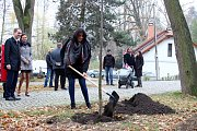 Zástupci havlíčkobrodského gymnázia, gymnázia ze slovenské Spišské Nové Vsi a města Havlíčkův Brod vysadili strom republiky.