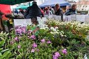 V KD Ostrov Havlíčkův Brod se od 28. - 30. dubna koná tradiční výstava Zahrada.