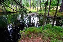 Místa, v nichž se lesní jezírka nacházejí, jsou neskutečně malebná. Zvláště teď, na podzim.