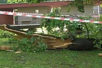 Čtvrteční noční vichřice napáchala škody například v havlíčkobrodkém parku Budoucnost. Silné větve urostlých lip lámala jako sirky. Kus stromu spadl například do areálu dětského hřiště za budovou AZ Centra na Rubešově náměstí.