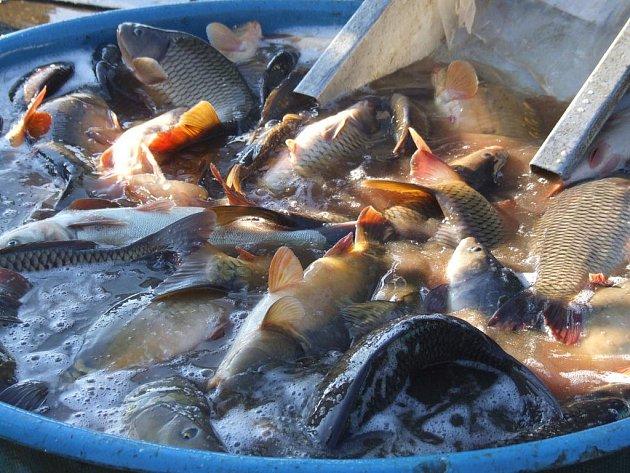 Řeka vydala rybářům své bohatství