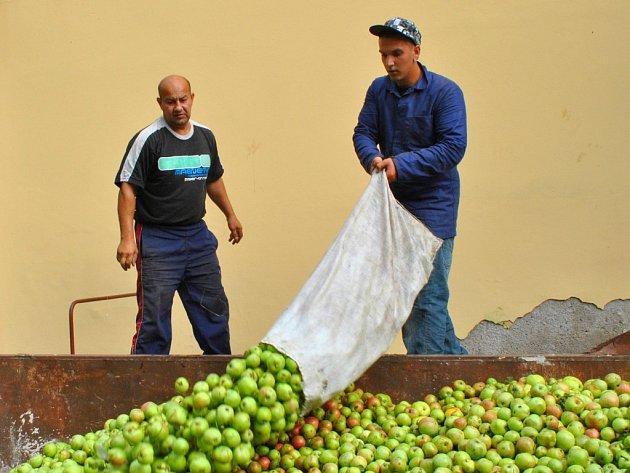 Ve výkupně  jablek v havlíčkobrodské Ledečské ulici je nyní hodně rušno.
