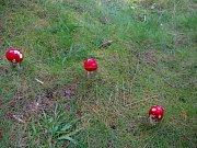 O své houbařské úlovky se podělila Michaela Kořínková ze Štoků.