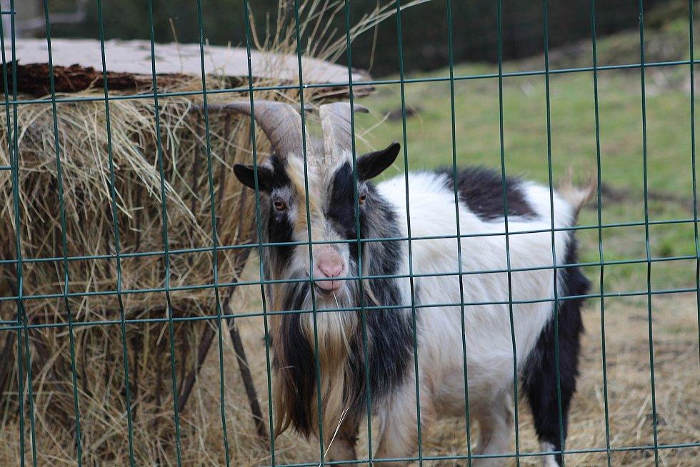 Výběh pro kozy
