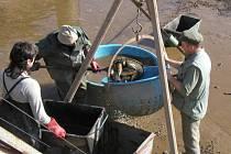 Horko neškodilo. Právě naopak, podle rybářů kaprovitým rybám i svědčí. Mnohem větším problémem jsou slabé průtoky vod a nedostatek kyslíku. To může způsobit potíže rybám lososovitým.