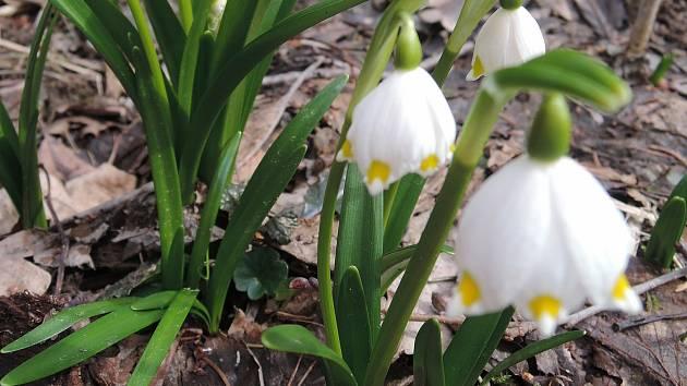 Jarní nádhera. Vyjděte si do přírody