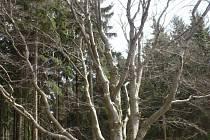 Žižkův dub je opravdu strom, který si zaslouží obdiv. Vzbuzuje nejenom respekt, ale podle těch, kteří se na dub byli osobně podívat, také vyzařuje obrovskou energii.