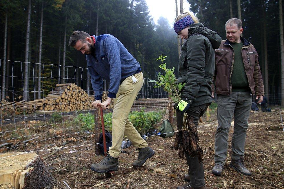 Studenti a zaměstnanci Fakulty lesnické a dřevařské ČZU se zapojili do obnovy lesů u Štoků.