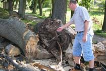 Letité stromy v aleji ke svaté Anně v Pohledu jsou často nevyzpytatelné. Někdy podlehnou silnému větru zcela zdravé stromy a ty nemocné a zpráchnivělé vydrží.  Proto Pohledští věnují aleji velkou pozornost. Starosta Milan Klement o tom ví své.