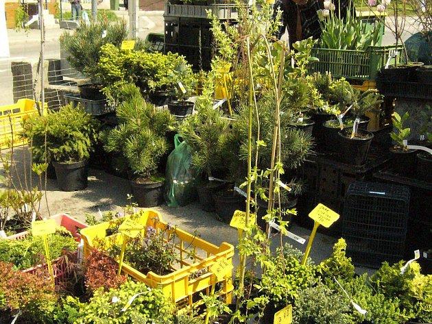 Příjemná Zahrada. To je kousek polidštěné přírody a výtvory zahradníků nemají daleko k umění.