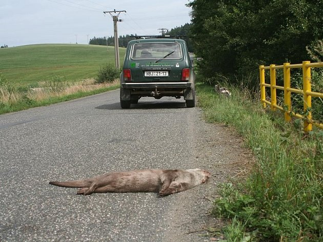 Podle policistů chybí řidičům na silnicích předvídavost. Mnoho zvířat však pod jejich koly umírá i kvůli jejich bezohledné jízdě. Ilustrační foto.