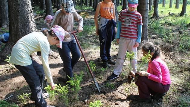 Děti v akci. Školáci si mohli sami vyzkoušet například i výsadbu sazenic jehličnatých stromů.