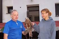 Vzácný dravec. Luňák hnědý není v české přírodě téměř k vidění. V pavlovské Stanici ochrany fauny se o dva nedávno starali František Kunc a Olga Růžičková.