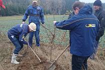 Výsadba stromů.